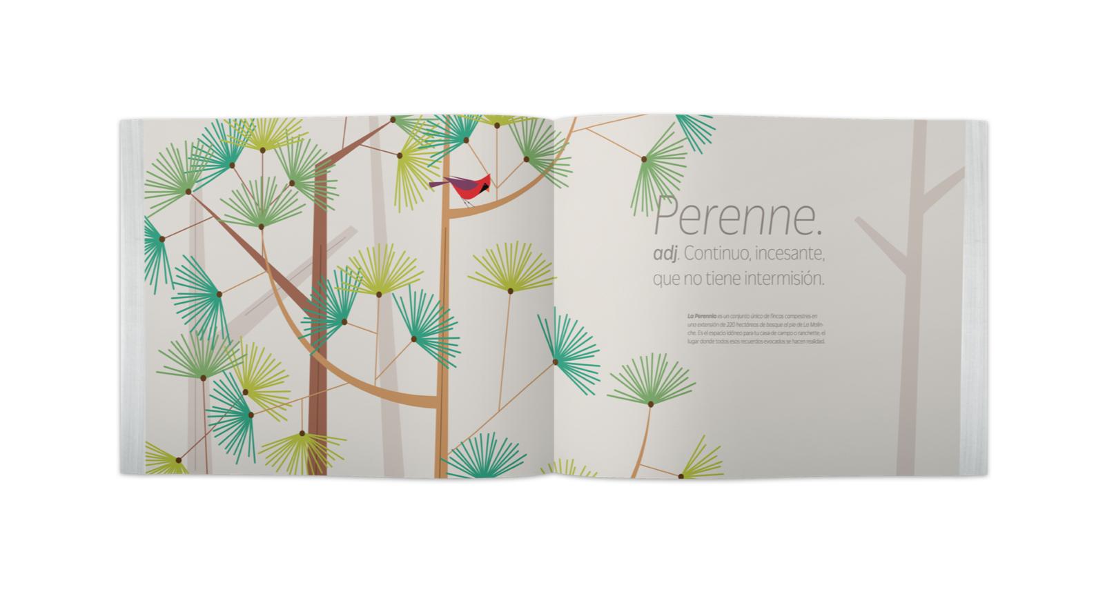 Brochure abierto con ilustraciones de árboles en y pájaros en la Malinche